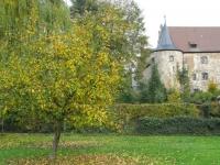 Baum am Schloss
